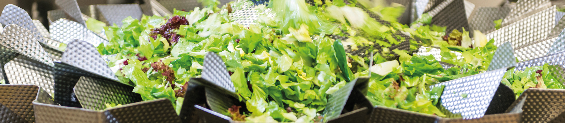 Improving shelflife: how cut leafy vegetables remain fresh longer