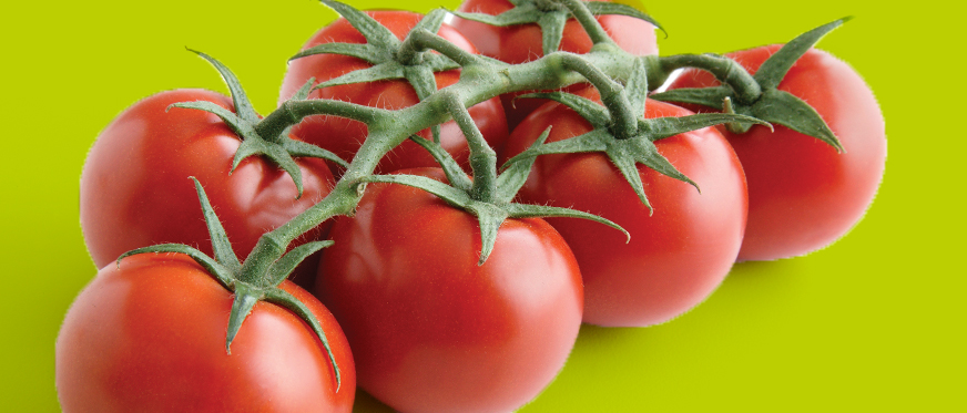 Tomatoes with green background