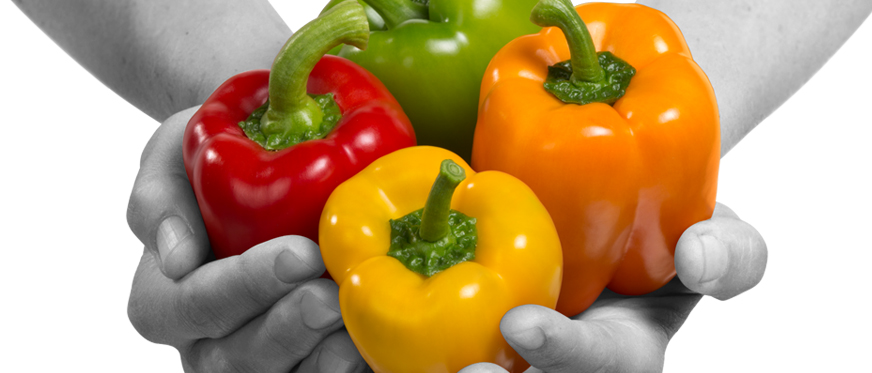 Green, red, orange and yellow sweet peppers in hands